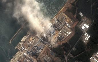 Il Pesce di Fukushima è Radioattivo