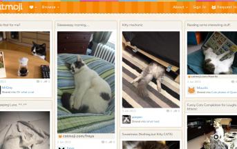 Social Network Catmoji, cos'è e come funziona