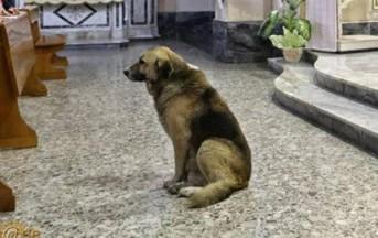 E' morto Tommy, il cane che aspettava la padrona davanti la Chiesa