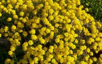 Allergie primaverili 2013, come contrastarle con rimedi naturali