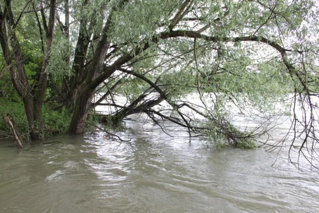 Rami spezzati sulle rive dell'Adda