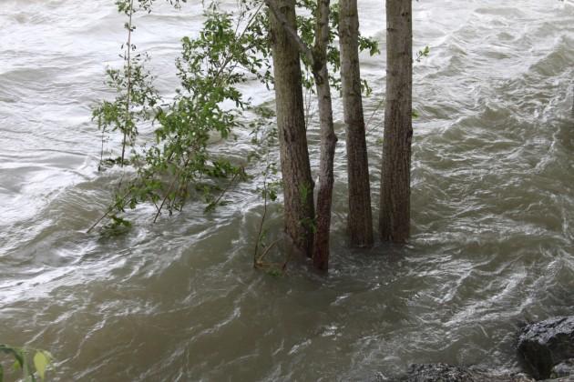 Adda alberi sommersi