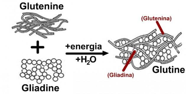 glutine e gliadine