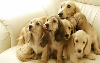 Fobia dei cani: ecco come superarla.
