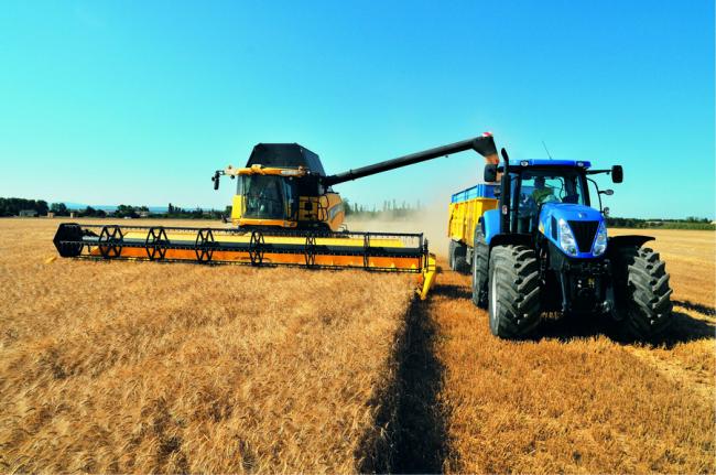 agricoltura_campi_e_coltivazioni