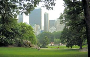 Polveri sottili: gli alberi scendono in nostro aiuto