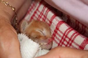 gattino discarica sonnellino