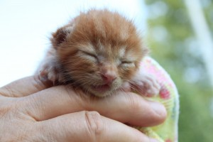 gattino discarica occhi chiusi