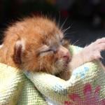 Gattino discarica 1