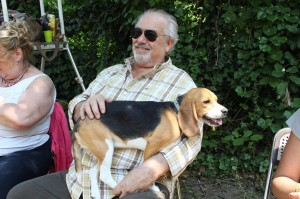 Beagle in braccio 2