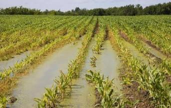 Maltempo: danni all'agricoltura per oltre un miliardo