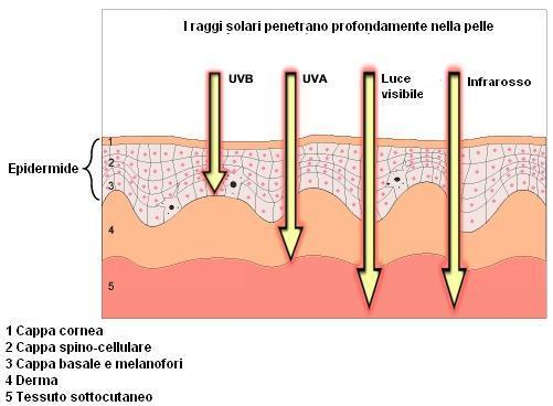 schema raggi solari sulla pelle