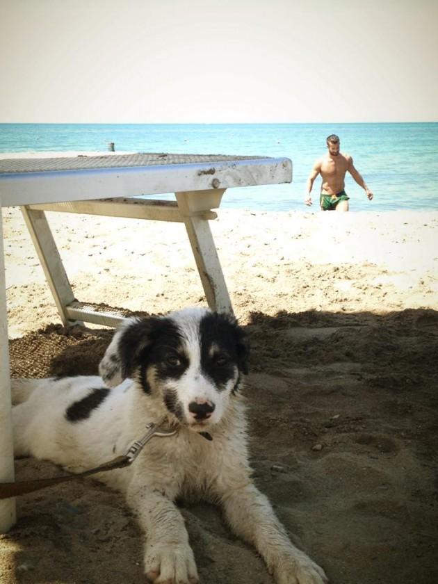 cane vacanza