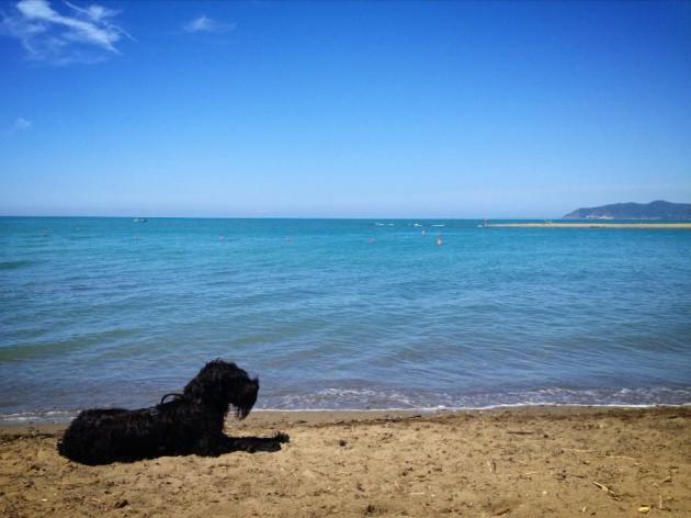 maremma spiagge per cani