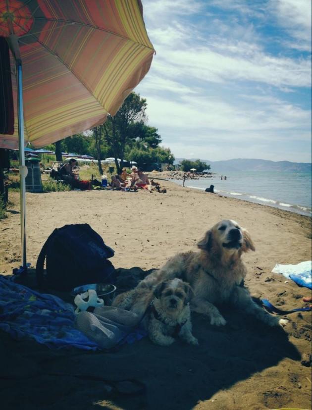 maremma spiaggia cani