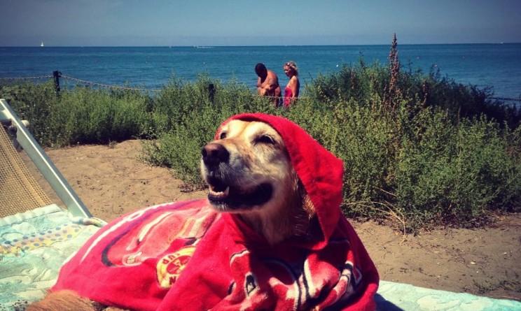 ecco le foto di una spiaggia toscana dove i cani possono