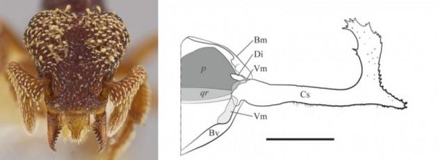 formica predatrice 7