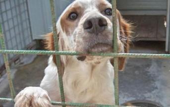 Contro il randagismo: adotti un cane e non paghi la Tares