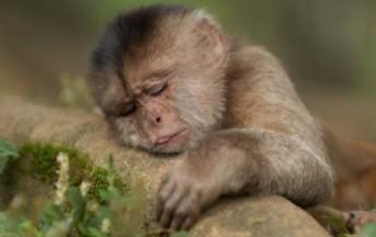 Gli animali sono intelligenti e hanno una coscienza: ecco le prove scientifiche