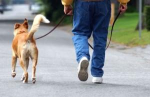 passeggiare con il cane2