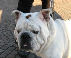 Esposizione canina erba2013 10