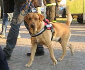 Esposizione canina erba2013 15