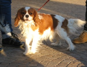 Esposizione canina erba2013 17