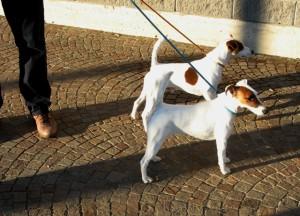 Esposizione canina erba2013 3