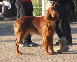 Esposizione canina erba2013
