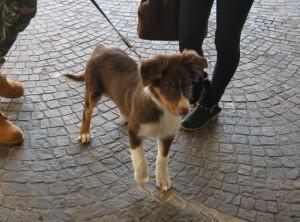 Esposizione canina erba2013 4