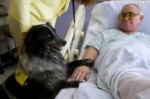 Pet Therapy negli ospedali