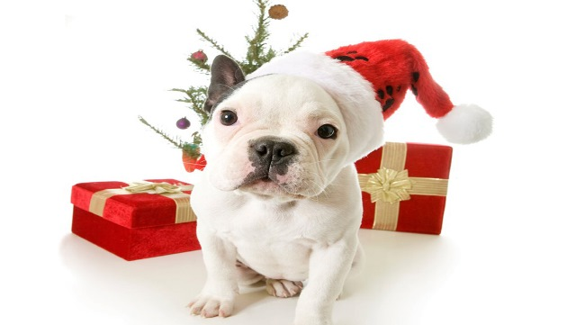 Immagini Divertenti Animali Natale.Idee Regalo Natale 2013 Un Pensiero Divertente Per I Nostri Animali Domestici Urbanpost
