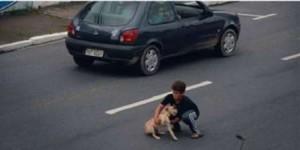 Salvataggio eroico del cane Mel