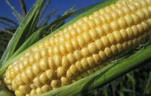 produzione cereali saturazione