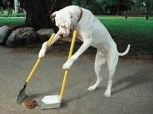 Cacca cane che ripulisce