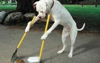 Napoli: DNA alla cacca dei cani per risalire ai colpevoli