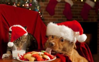Vietato dare avanzi dei cenoni natalizi ai vostri animali