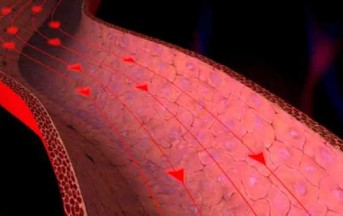 Ipertensione, per le donne il 40% di rischi in più rispetto agli uomini