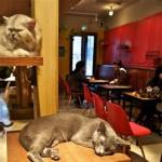 Neko Caffè anche a Torino