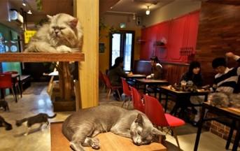 """""""Neko caffè"""" apre a Torino: gatti nei locali tra coccole e cappuccino"""