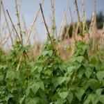agricoltura bando imprenditori