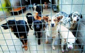 meno tasse di paolo adottare cani canile lazio