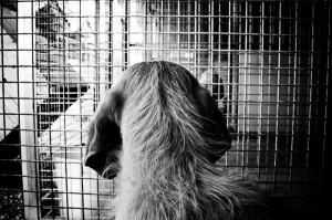 adozione cani puglia