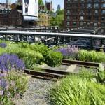 High Line New York progetto agricoltura urbana