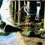 biodiesel con alghe