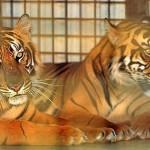 zoo guspini