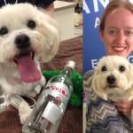 Charlie salvato dalla Vodka