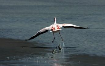 Primavera Slow 2014, sul delta del Po il turismo è naturalistico