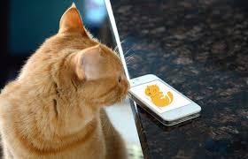 Kittyo ha un'applicazione e un dispositivo