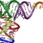 RNA ricerca ereditarietà traumi